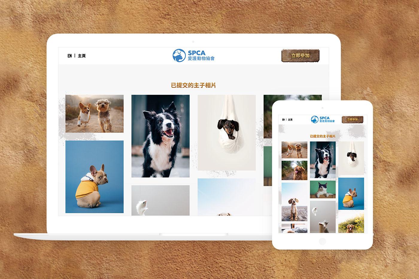 爱护动物协会