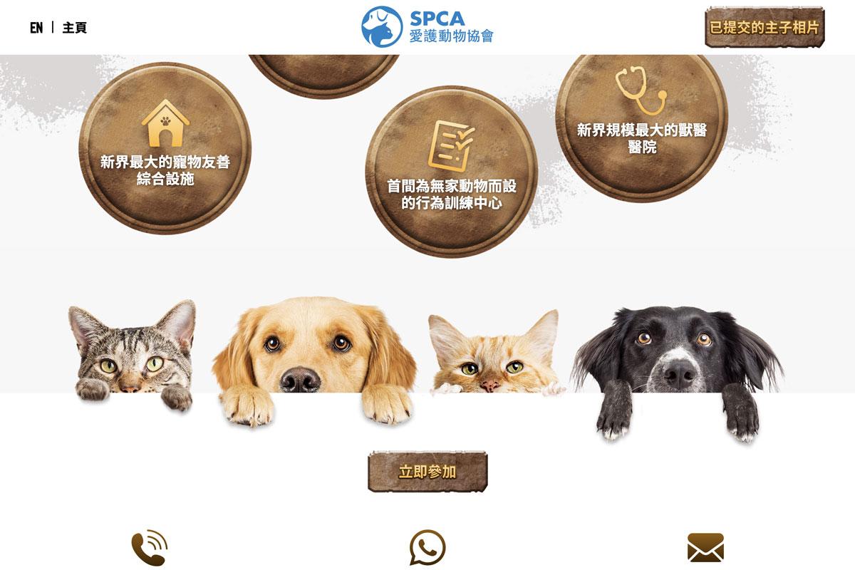 spca-homepage-2.jpg