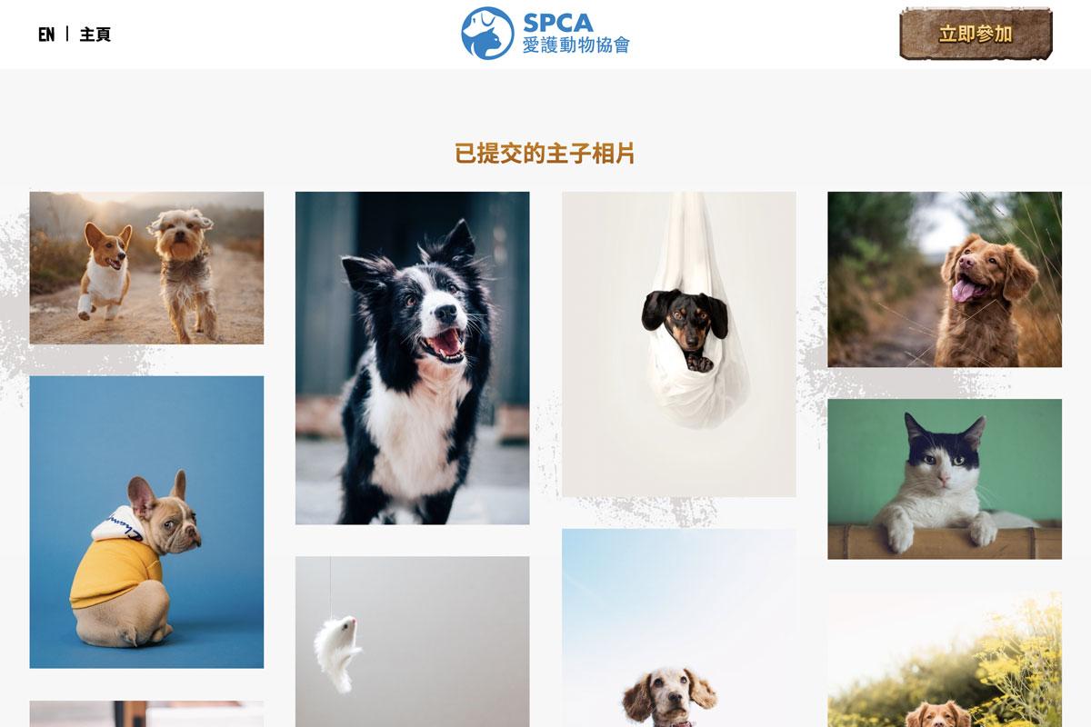 spca-homepage-3.jpg